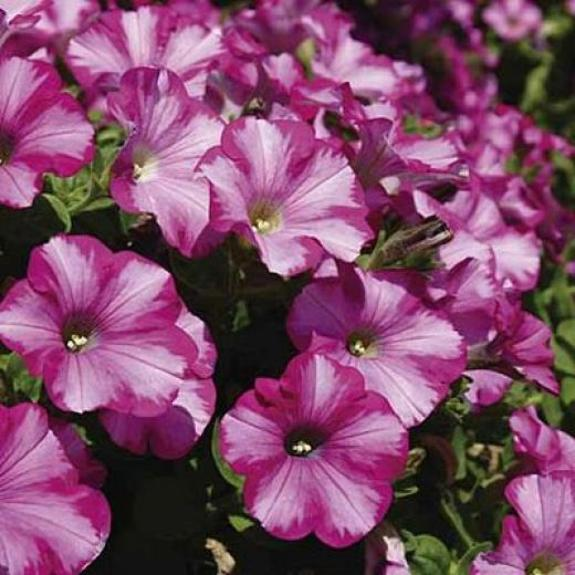 The Benefits of Planters and Annual Bedding Plant Displays
